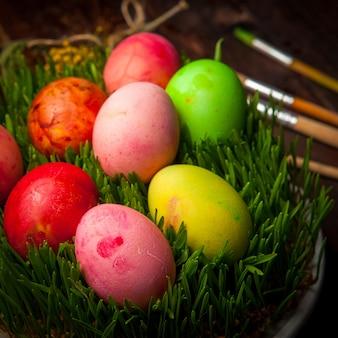 La vista laterale ha colorato le uova con il semeni in piatto bianco