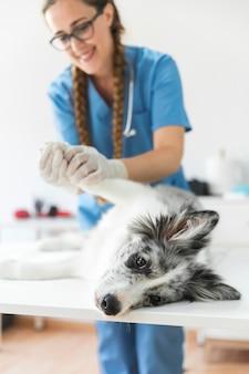 La zampa del cane d'esame veterinario femminile sorridente che si trova sulla tavola in clinica