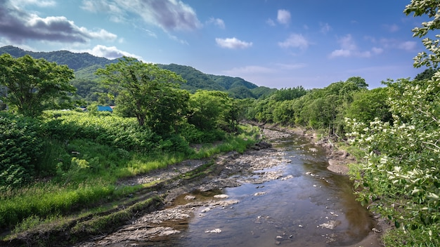 Lago asciutto dell'acqua con la priorità bassa verde naturale di vista della foresta dell'albero