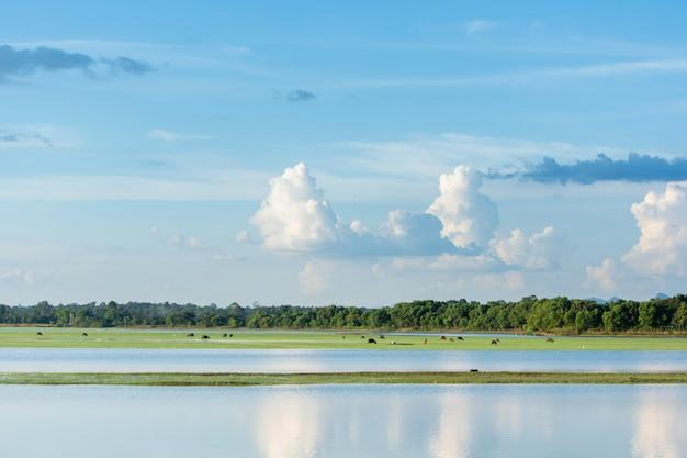 Lago con la priorità bassa nuvolosa del cielo blu con lo spazio della copia