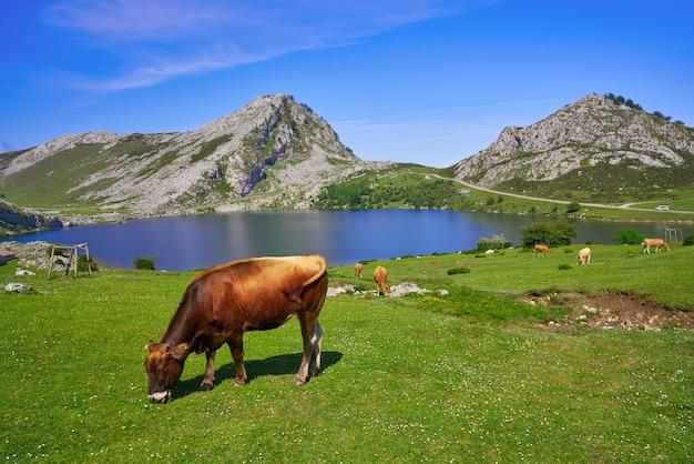 Lago enol a picos de europa in asturie spagna