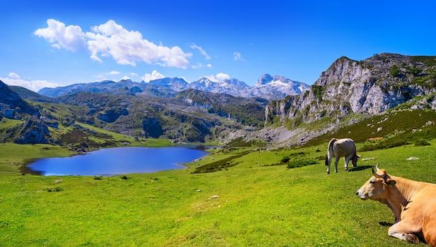 Lago ercina a picos de europa in asturie spagna