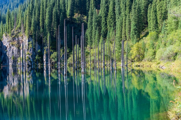 Lago kaindy - lago della montagna nel kazakistan
