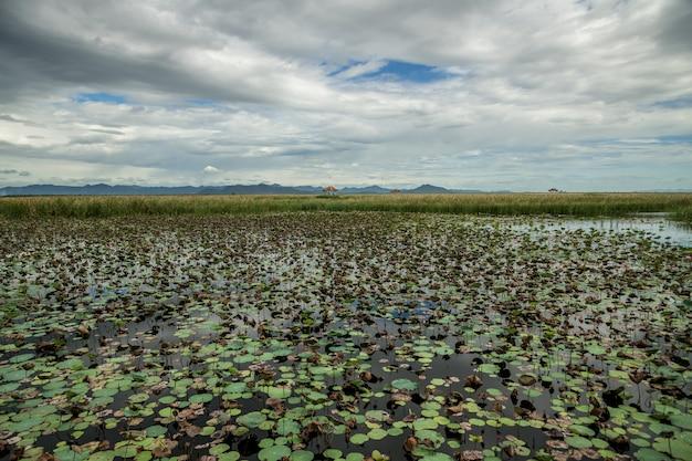 Lago lotus con paesaggio della montagna del calcare al parco nazionale di khao sam roi yod, provincia di prachuap khiri khan tailandia.