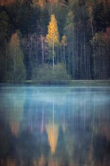 Lago nebbioso in un bosco di betulle in autunno la mattina presto