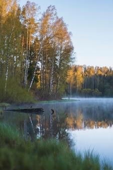 Lago nebbioso in un bosco di betulle in estate