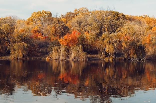 Lago nel parco in autunno