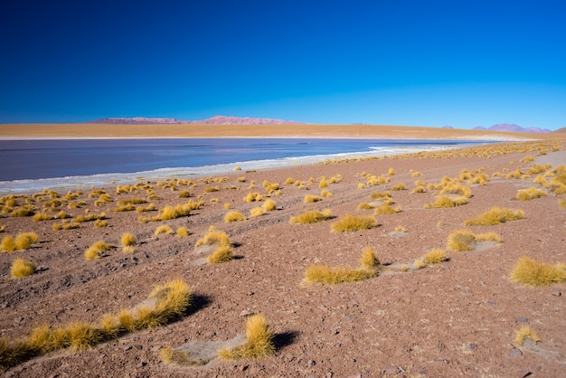 Lago salato ghiacciato sulle ande