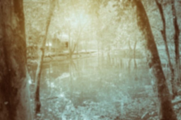 Lago tra gli alberi