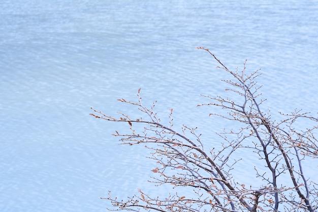 Lago verde smeraldo (laguna esmeralda) a ushuaia.