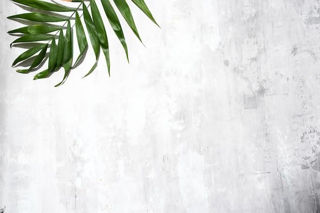 Lame di foglie di palma verdi contro il fondo grigio del muro di cemento, vista superiore con lo spazio della copia