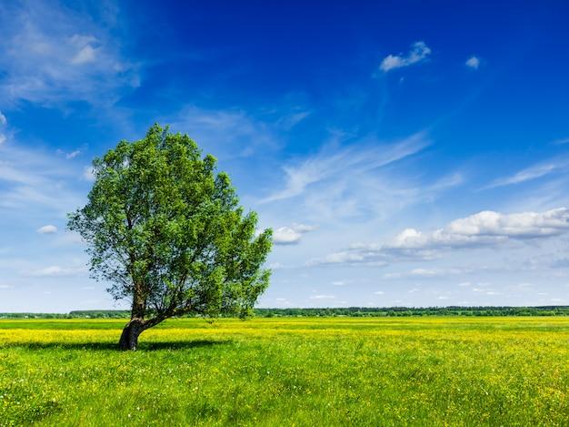 Lanscape di paesaggio del campo verde di estate della primavera con il singolo albero