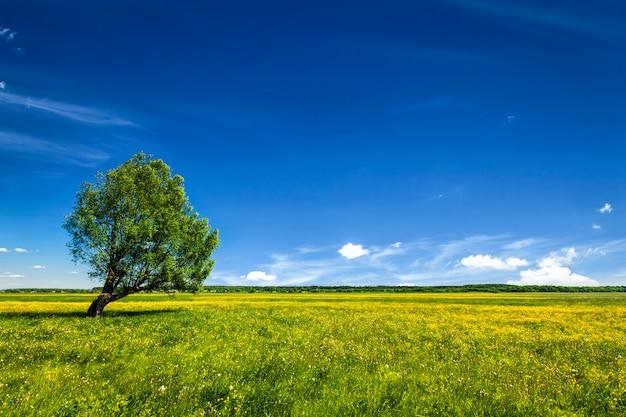 Lanscape verde di paesaggio del campo con il singolo albero