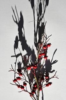 Lascia cadere l'ombra da un ramo con bacche. vista dall'alto della lunga ombra di un ramo che cade.