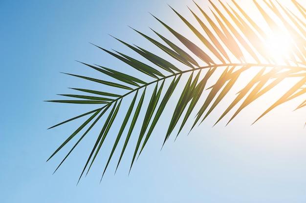 Lascia la cornice di rami di cocco con cielo blu