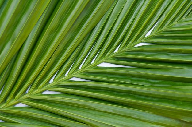 Lascia la priorità bassa verde di palma