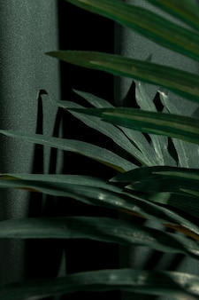 Lateralmente chiudono le foglie di palma