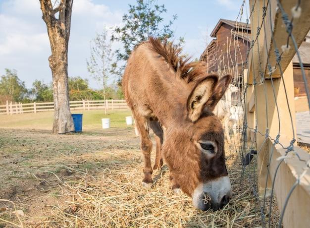 Lato marrone nano dell'asino che mangia erba