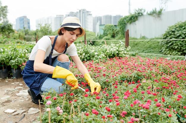 Lavoratore del giardino che si prende cura delle piante