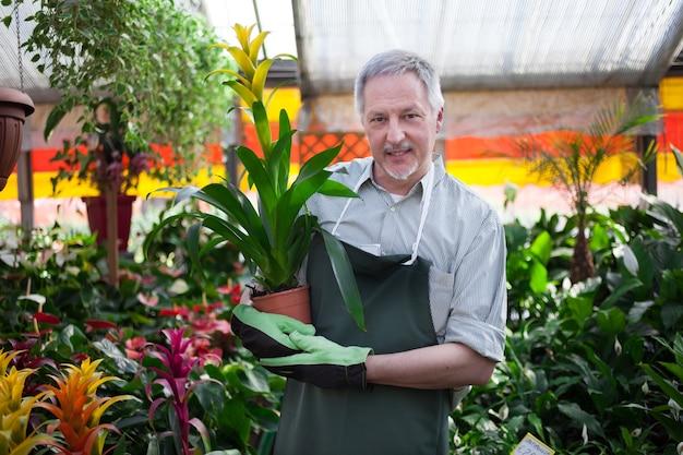 Lavoratore sorridente che tiene una pianta in una serra