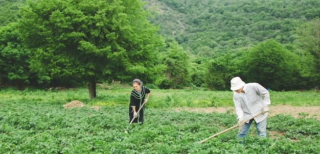 Lavoratori che piantano le verdure nell'azienda agricola con le attrezzature.