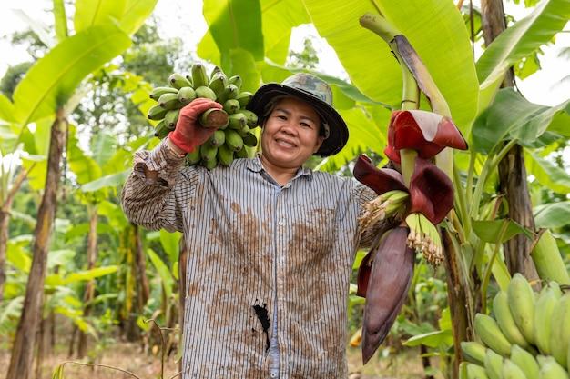 Lavoratrice agricola asiatica che porta banana verde in azienda agricola. concetto di agricoltura.
