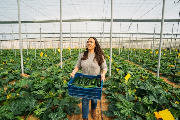 Lavoratrice della giovane donna in scatola della tenuta della serra di zucchine organica in serra.