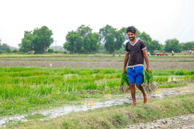 Lavoro indiano che lavora nel campo di riso