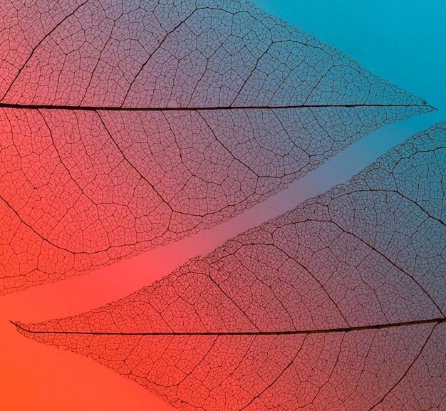 Lay piatto di foglie traslucide texture lamina