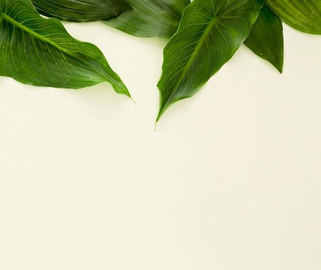 Lay piatto di più foglie con copia spazio