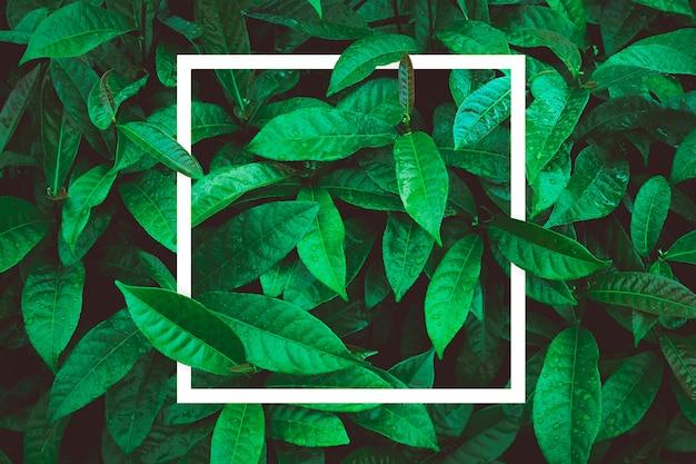 Layout creativo fatto di foglie con nota carta di carta.