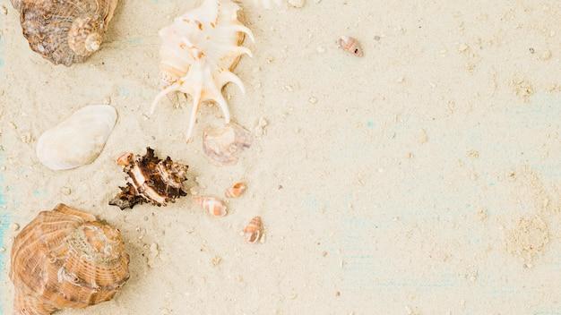 Layout di conchiglie tra sabbia