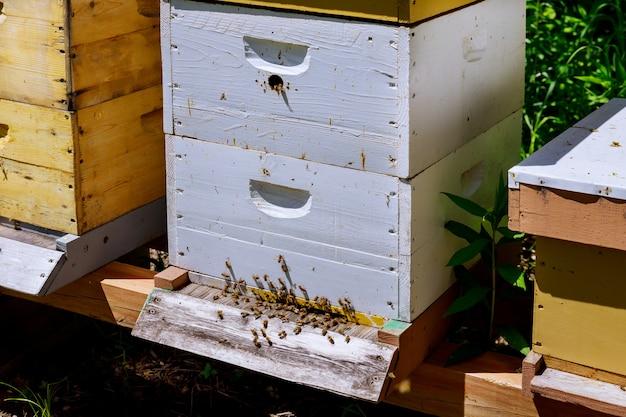 Le api ritornano nella famiglia delle api vicino all'alveare.