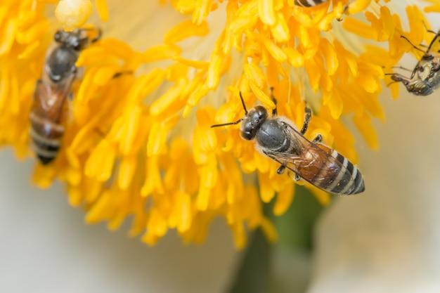 Le api trovano cibo sui fiori