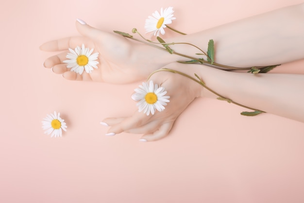 Le belle mani alla moda sono coperte di fiori di camomilla. concetto di cura della pelle