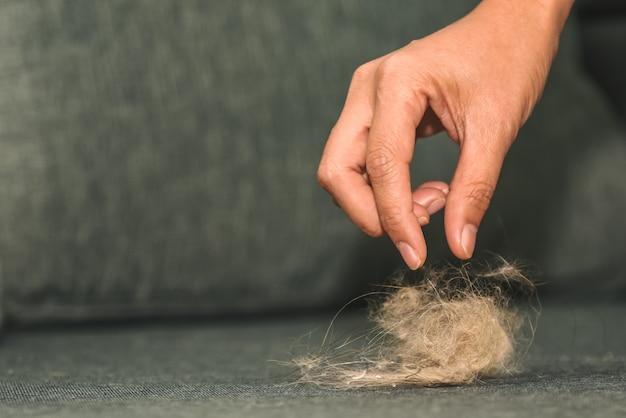 Le casalinghe stanno raccogliendo pellicce di gatto e frammenti di capelli dal divano.
