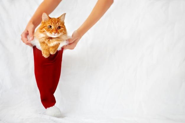 Le donne tengono un cappello rosso di natale con il gatto dello zenzero in esso