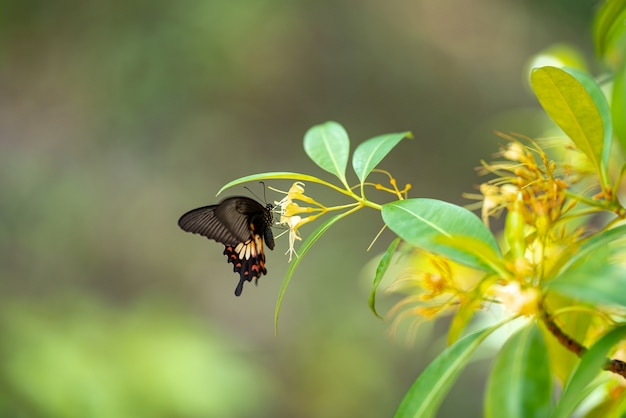 Le farfalle scendono a mangiare minerali al mattino