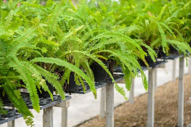 Le felci di beautyful lasciano il fogliame verde floreale naturale