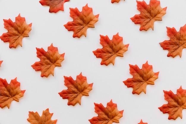 Le foglie cadono distese in ordine di tessitura