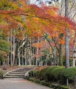 Le foglie colorate autunno fanno il giardinaggio in tempio di daigo-ji, kyoto, giappone