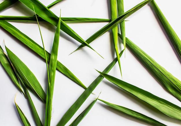 Le foglie di bambù sono a forma di cuore su bianco