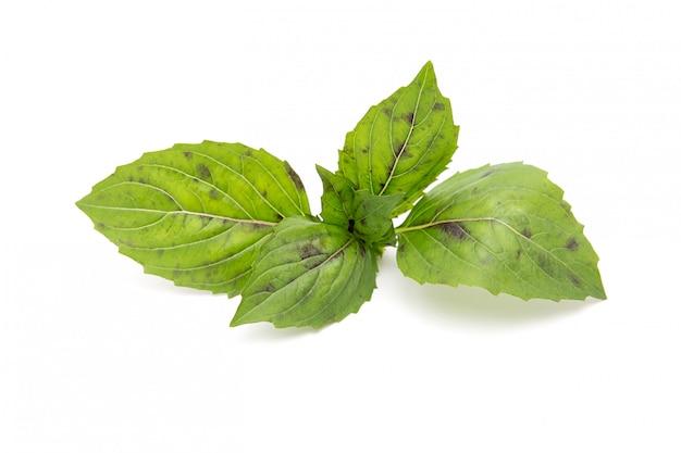 Le foglie di basilico verde su bianco