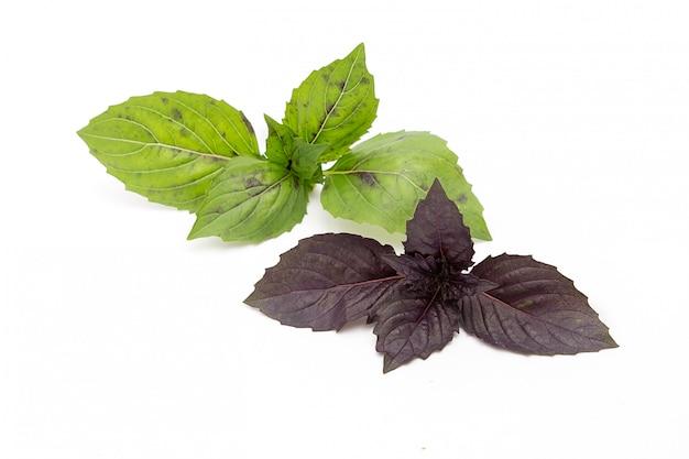 Le foglie di basilico viola e verde su bianco