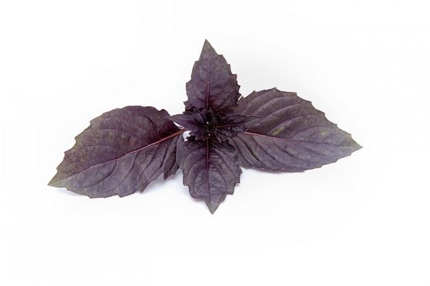 Le foglie di basilico viola su bianco