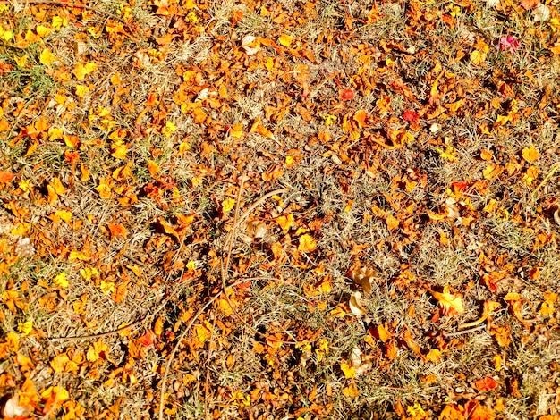 Le foglie secche di arancio e rosso cadono sul pavimento causando alte temperature