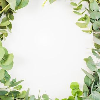 Le foglie sono disposte come cornice su sfondo bianco