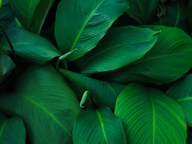 Le foglie tropicali verdi modellano il fondo, lo sfondo naturale e la carta da parati.