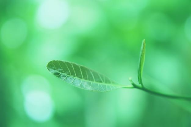 Le foglie verdi con bokeh si accendono nel fondo della carta da parati della natura della molla della natura