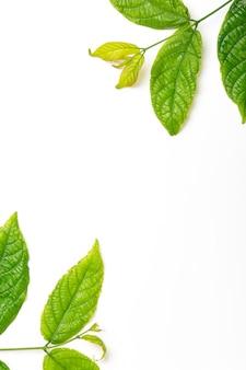 Le foglie verdi incorniciano il fondo astratto isolato su bianco